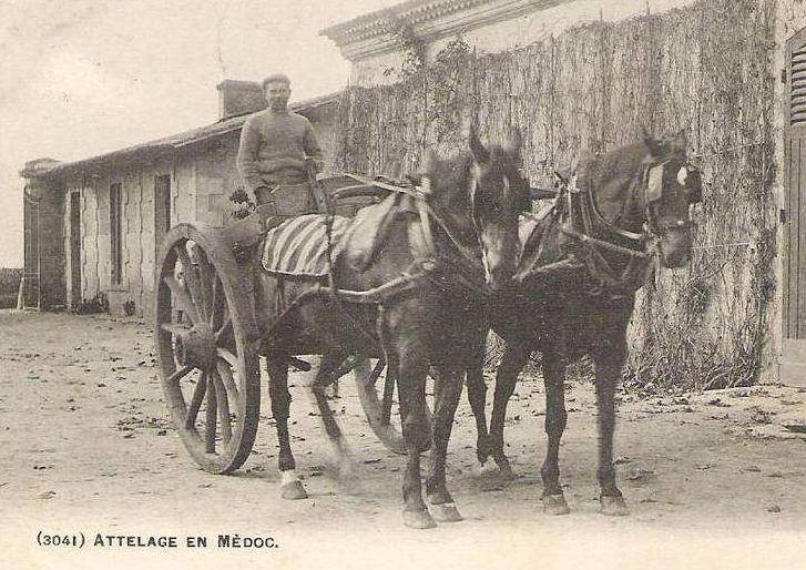 ensemble et atellage Attelag-medoc-joug-dorsal-carrick