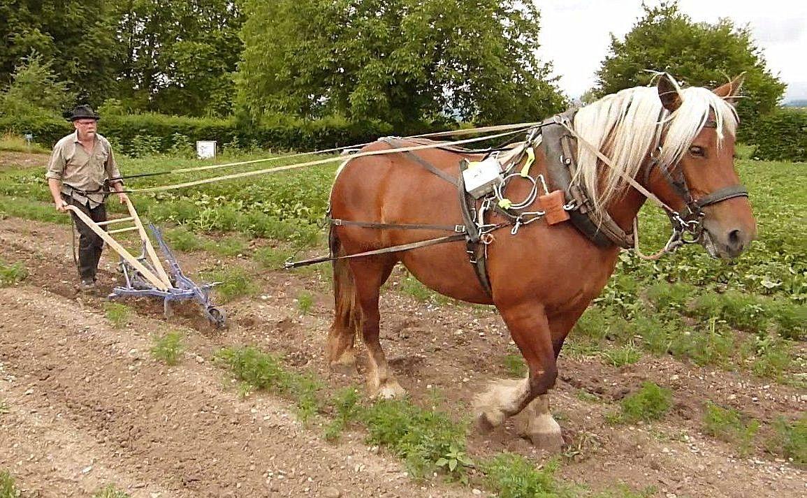 cheval passion avignon