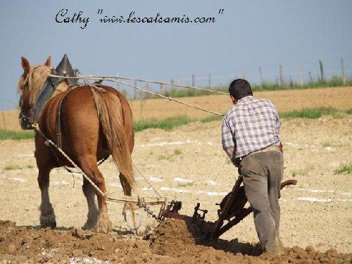Mot cl labour bourr hippotese le cheval de travail - Labourer la terre ...