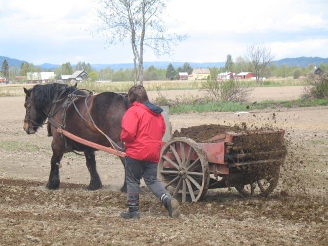 crottin de cheval pour le jardin