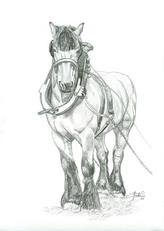 cheval de trait dessin