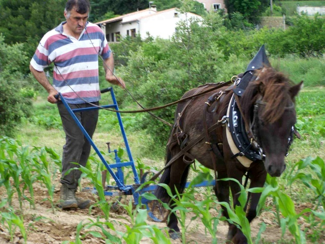 http://hippotese.free.fr/blogdocs4/poneys-gilles07-00.jpg