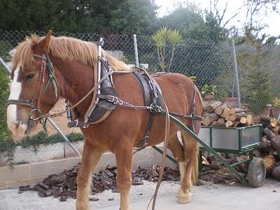 cheval de trait traction