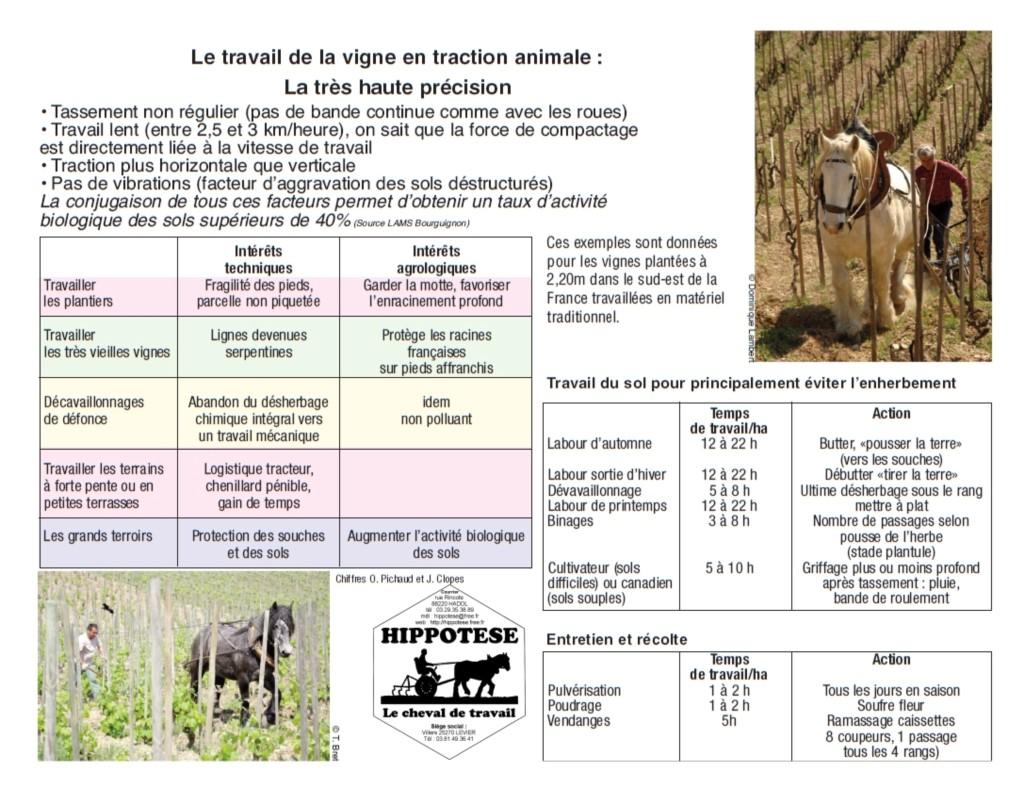 Travaux Vigne Calendrier.Mot Cle Cheval En Vigne Hippotese Le Cheval De Travail