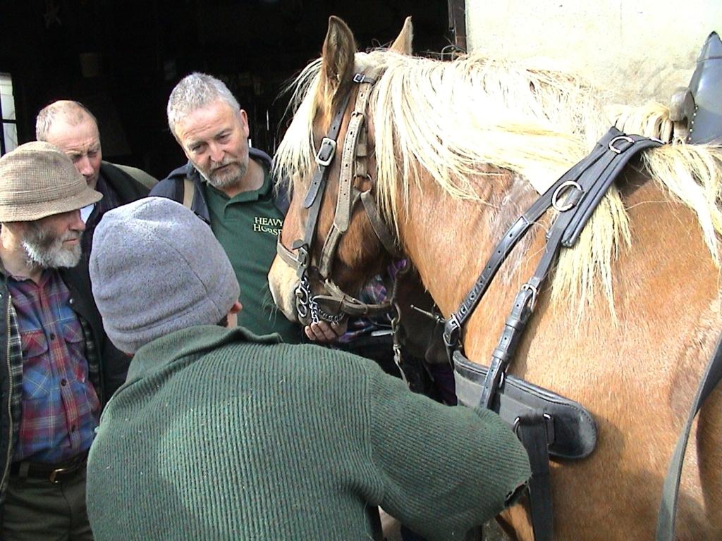 rencontres passionnés de chevaux