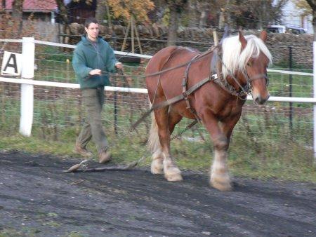 cheval de trait formation